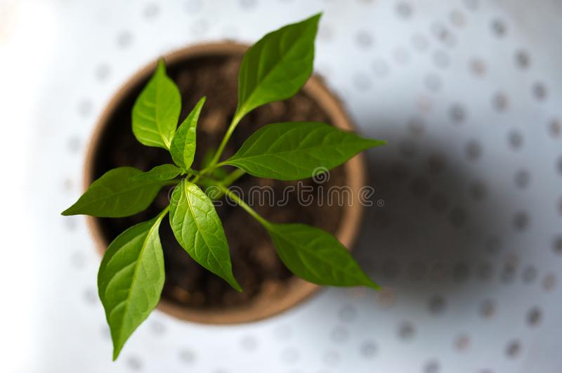Selective Photography of Green Leaf Plant in Brown Pot royalty free stock photos