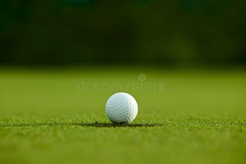 Selekcyjna ostrość białej piłki golfowej pobliska dziura na zielonej trawie dobry f fotografia royalty free