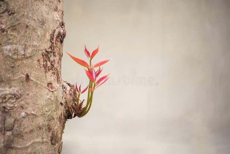 Selekcyjna ostrość na małych gałąź i liście r w górę ciała drzewo od obrazy royalty free