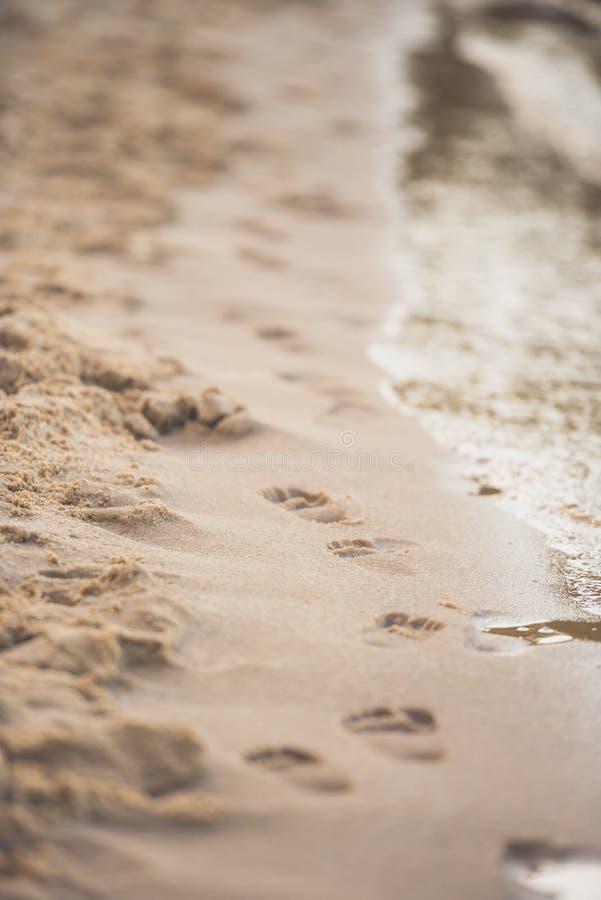 selekcyjna ostrość odciski stopy na piaskowatej plaży ilustracja wektor