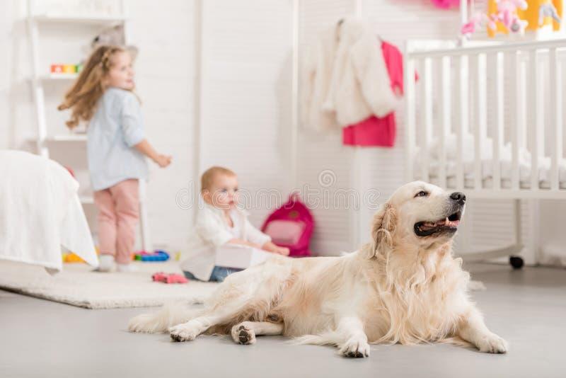selekcyjna ostrość urocze siostry bawić się na podłodze, śliczny golden retriever kłama blisko obrazy stock