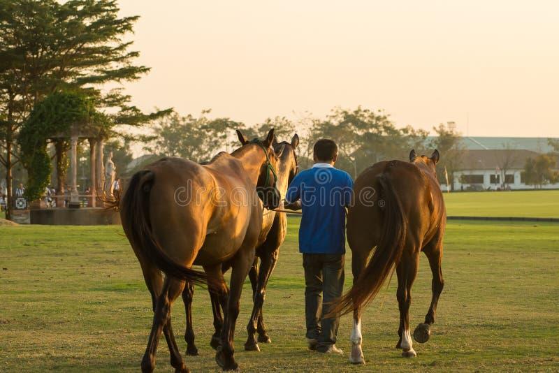 Selekcyjnej ostrości fornal i polo koń blisko polo pola obraz stock