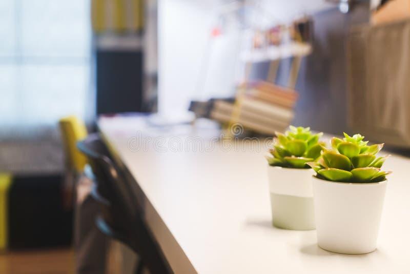 Selekcyjnej ostrości liści mała zielona roślina puszkuje na pracującego stołu tle z zamazanym tłem Pracować w domu tło zdjęcia stock