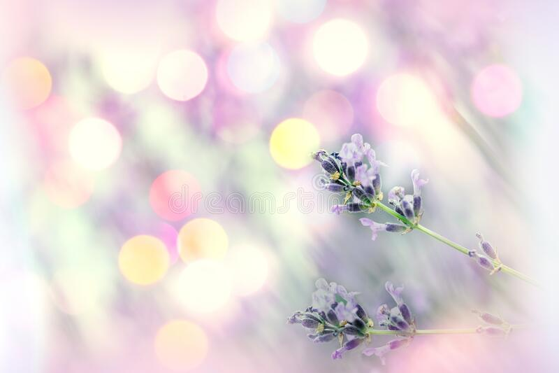 Selektiv och mjuk fokusering på lavendelblomma med linsbakgrund arkivfoto