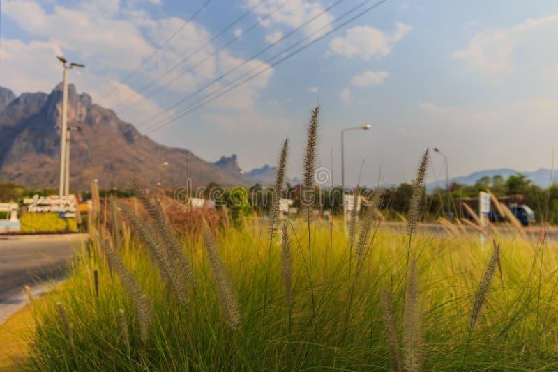 Selektive Fokussierung einer Grasblume lizenzfreie stockfotografie