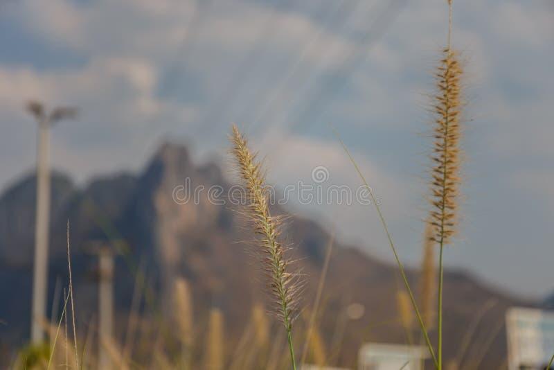 Selektive Fokussierung einer Grasblume stockfotos