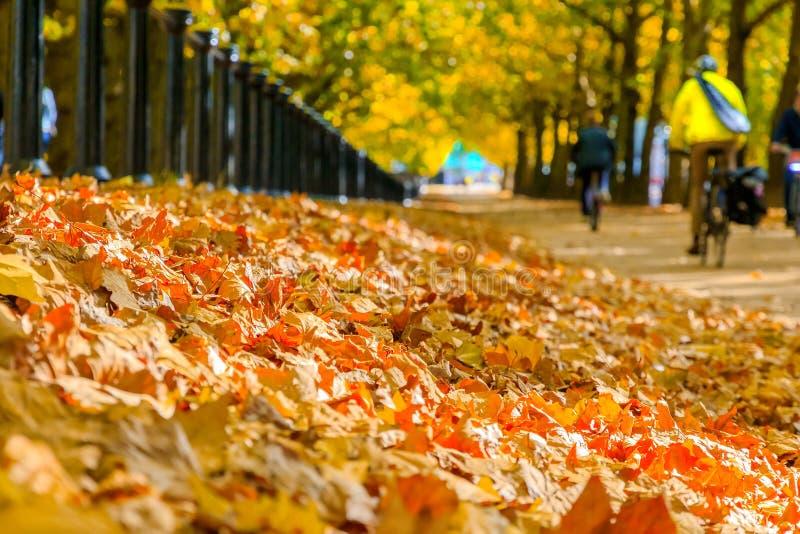 Selektiver Fokus, Stapel des Herbstlaubs mit Konstitutionshügelstraße im Hintergrund lizenzfreie stockbilder