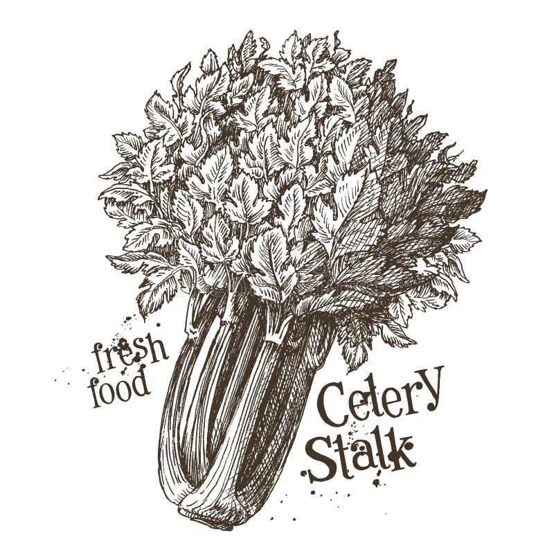 Selerowego badyla loga projekta wektorowy szablon świeży ilustracja wektor