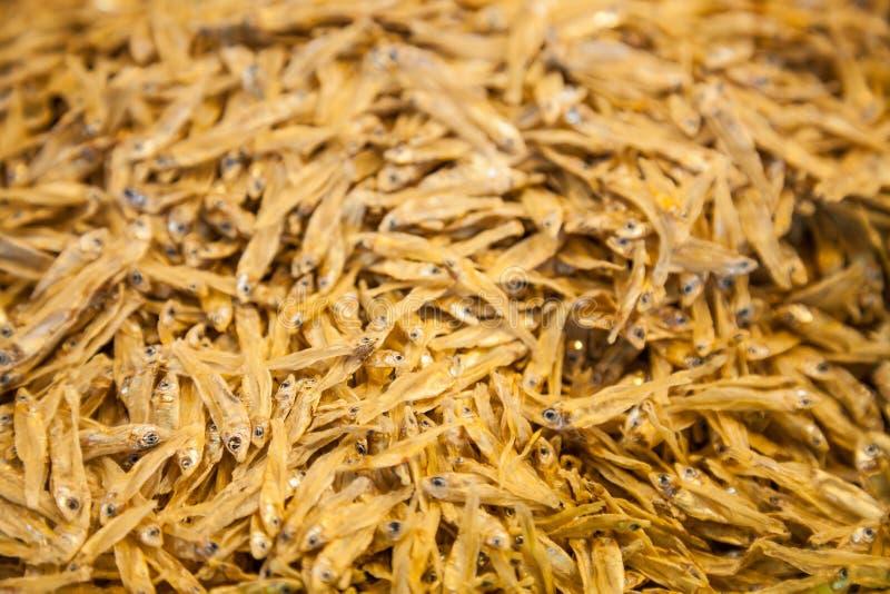 Selettivo messo a fuoco sui piccoli ciprinidi, spratto ed acciuga cucinati seccati al sole ha ordinato il fondo dei pesci Pesce m fotografia stock libera da diritti