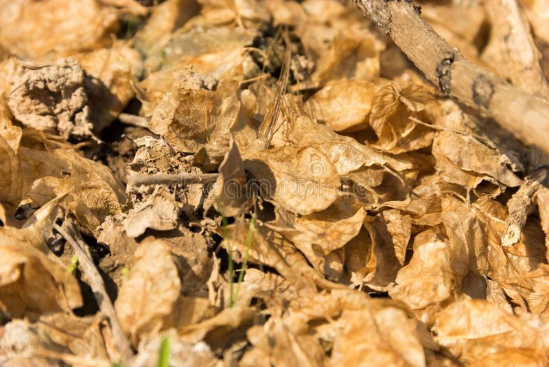 Selettivo messo a fuoco sulle foglie secche cadute sui precedenti del pavimento immagini stock