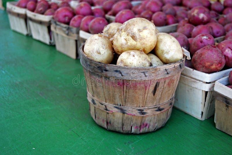 Selezionamento della patata fotografia stock