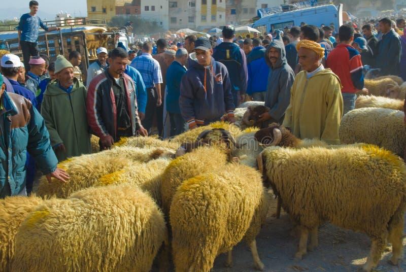 Selezionando una pecora per il sacrificio di Eid al-Adha fotografie stock libere da diritti