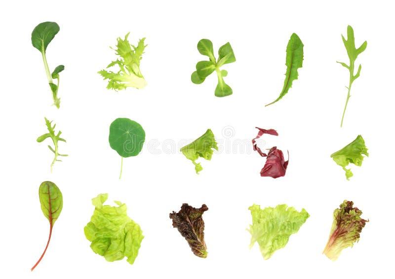 Selezione del foglio dell'insalata immagine stock