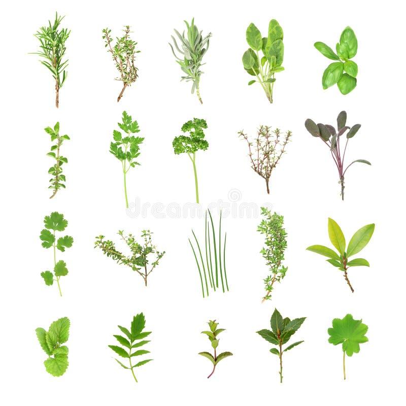 Selezione fresca dell'erba illustrazione vettoriale