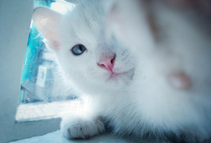 Selfi cat stock photo