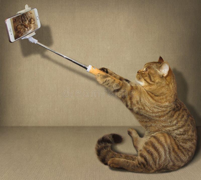 Selfie猫 免版税图库摄影