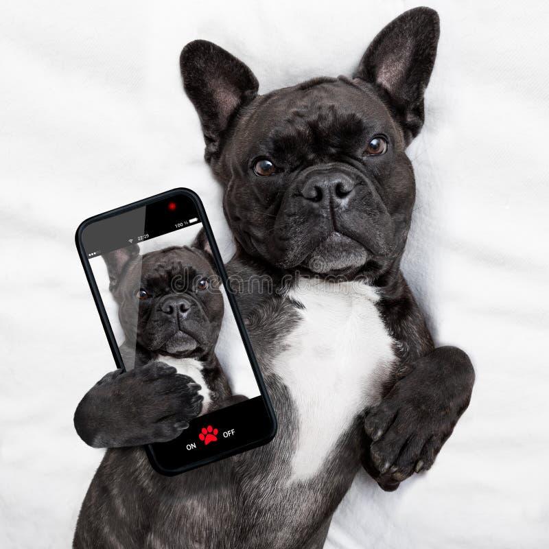 Selfie собаки в кровати стоковые фотографии rf