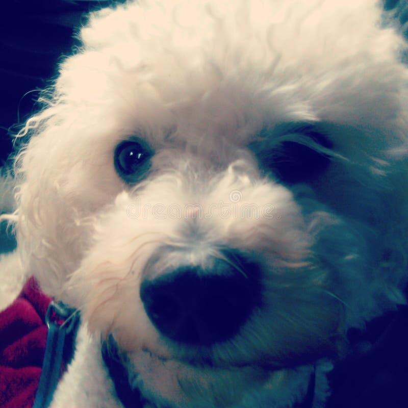 Selfie собаки стоковые изображения