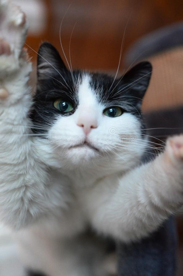 Selfie cat royalty free stock photography