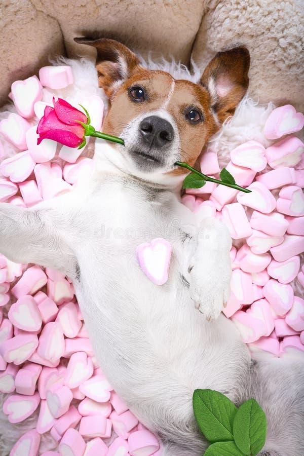 Selfie color de rosa de las tarjetas del día de San Valentín del amor del perro foto de archivo