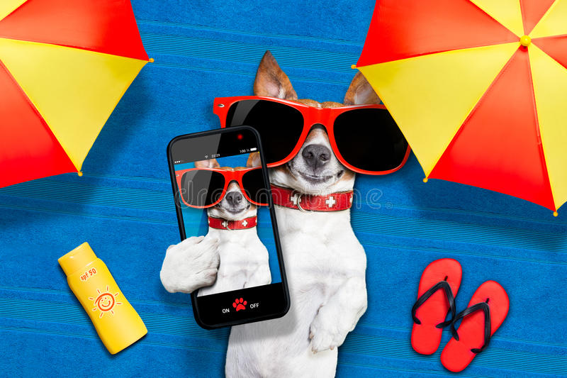 Selfie da praia do verão do cão fotografia de stock royalty free
