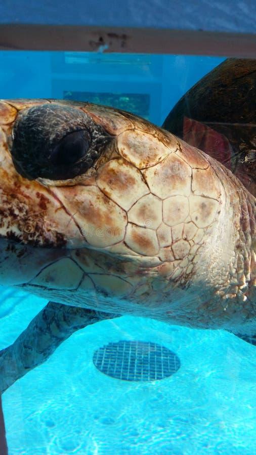 Selfie de la tortuga imágenes de archivo libres de regalías