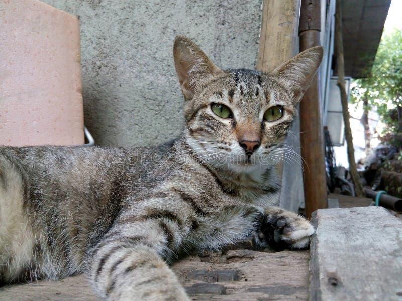 Selfie del gato imagenes de archivo