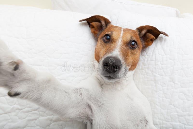 Selfie del perro imagen de archivo