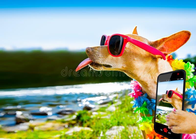 Selfie del perro de las vacaciones de verano de la playa fotos de archivo