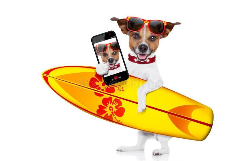 Selfie del perro que practica surf imagen de archivo libre de regalías