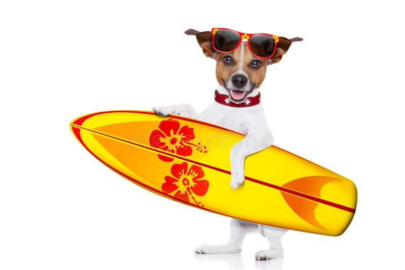 Selfie del perro que practica surf foto de archivo