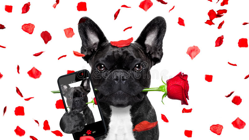Selfie do cão dos Valentim no amor fotografia de stock royalty free