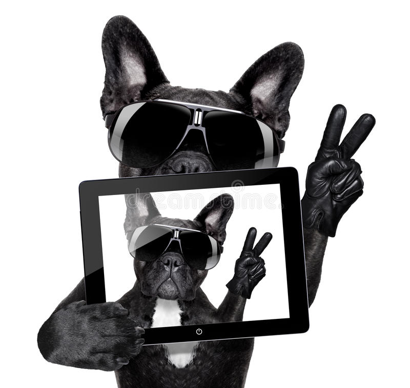 Selfie dog. French bulldog making a selfie with tablet pc stock image