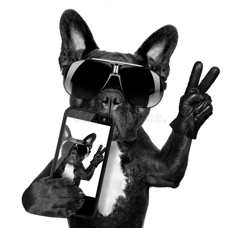 Selfie dog stock image