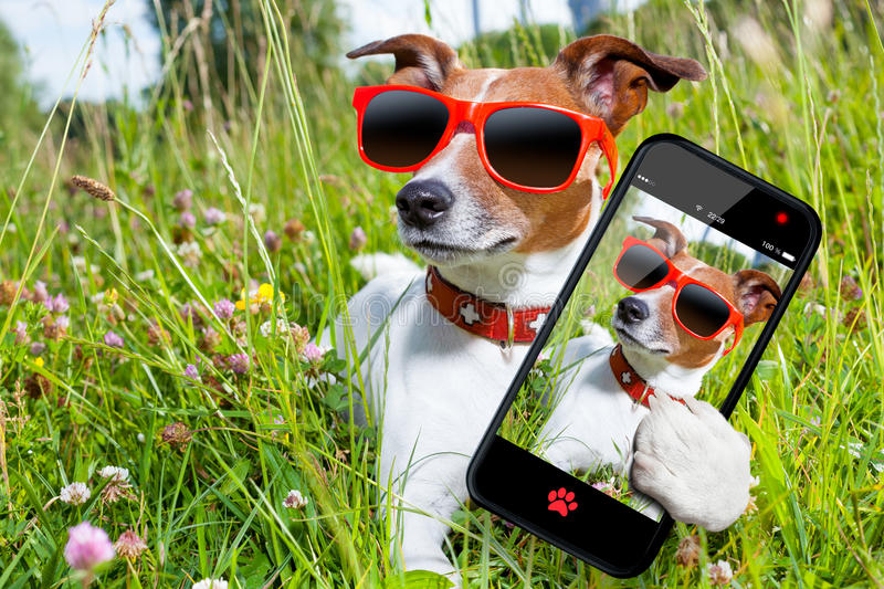 Selfie dog in meadow stock photos