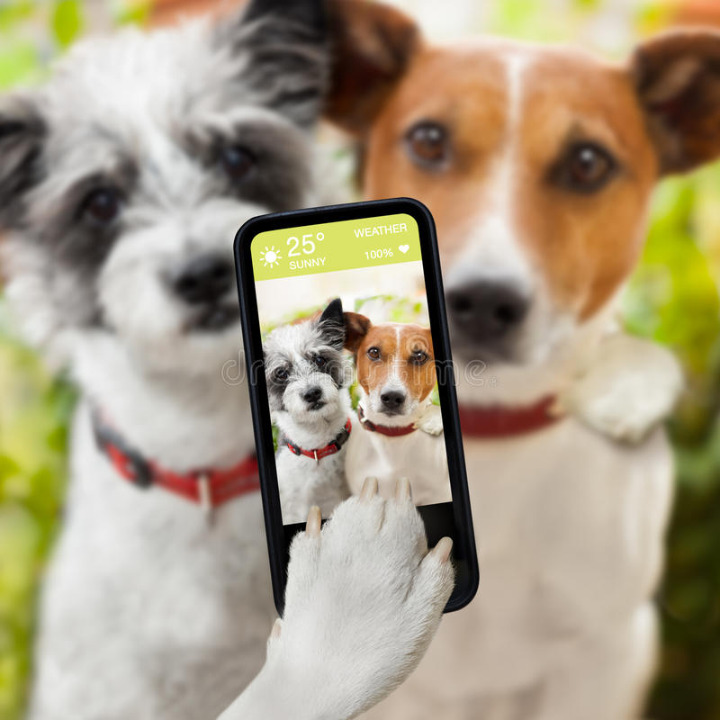 Selfie dogs. Couple of dog taking a selfie together with a smartphone