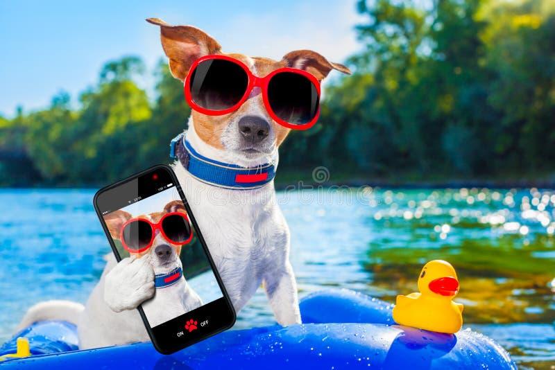 Selfie för strandsommarhund arkivbilder