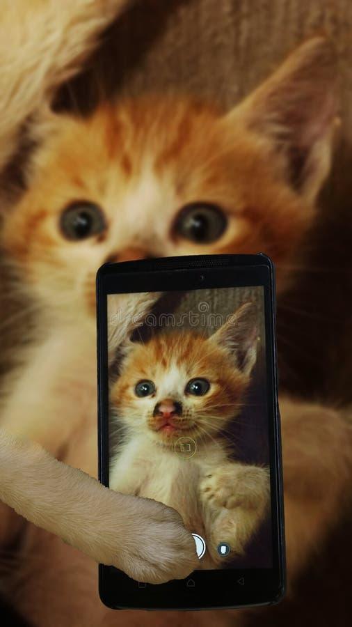 Selfie katt arkivbilder