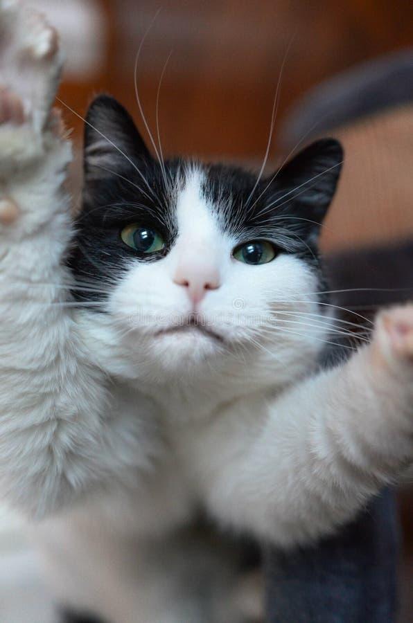Selfie katt royaltyfri fotografi