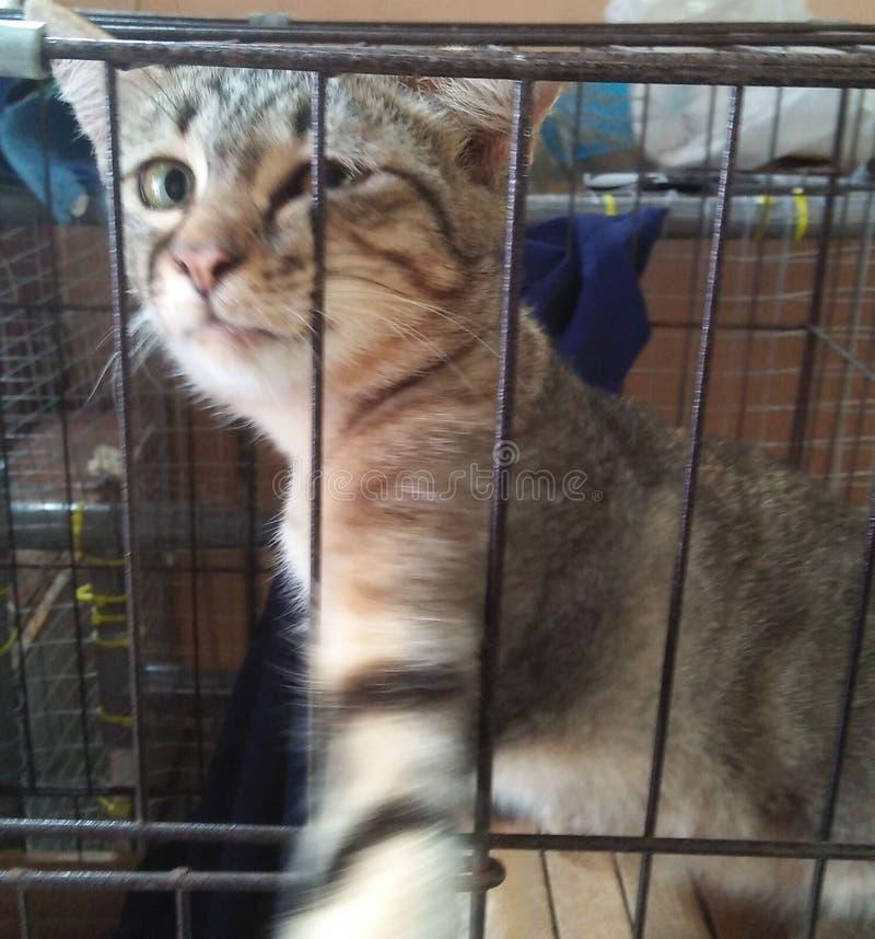 Selfie-Katze stockfotografie