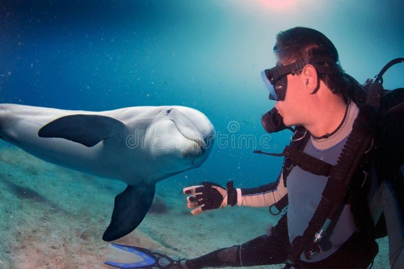 Selfie med undervattens- komma för delfin till dykaren arkivbilder