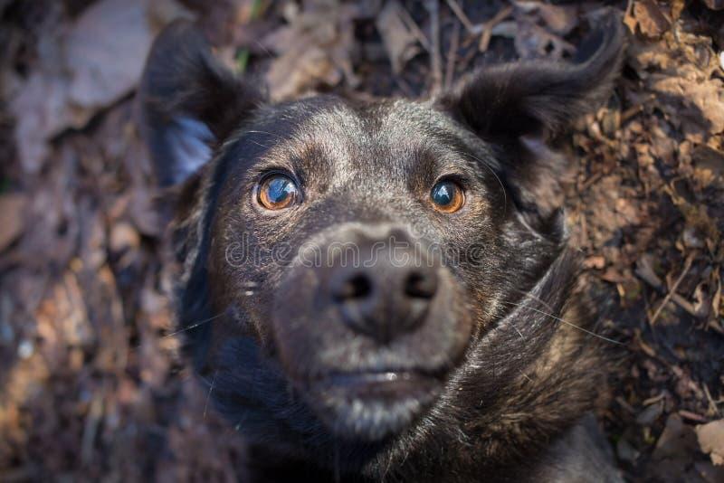 Selfie misturado do cão da raça fotografia de stock