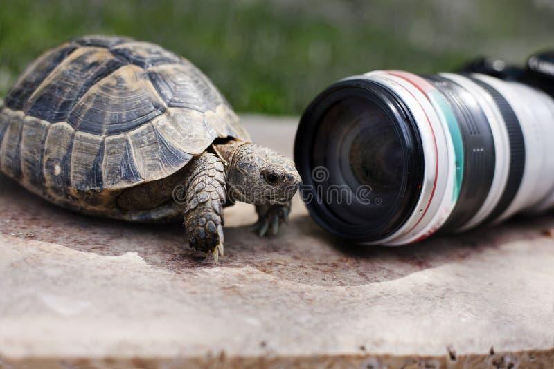 Selfie-Schildkröten stockbild
