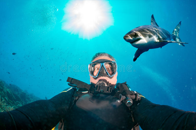 Selfie subaquático com o tubarão branco pronto para atacar imagens de stock royalty free