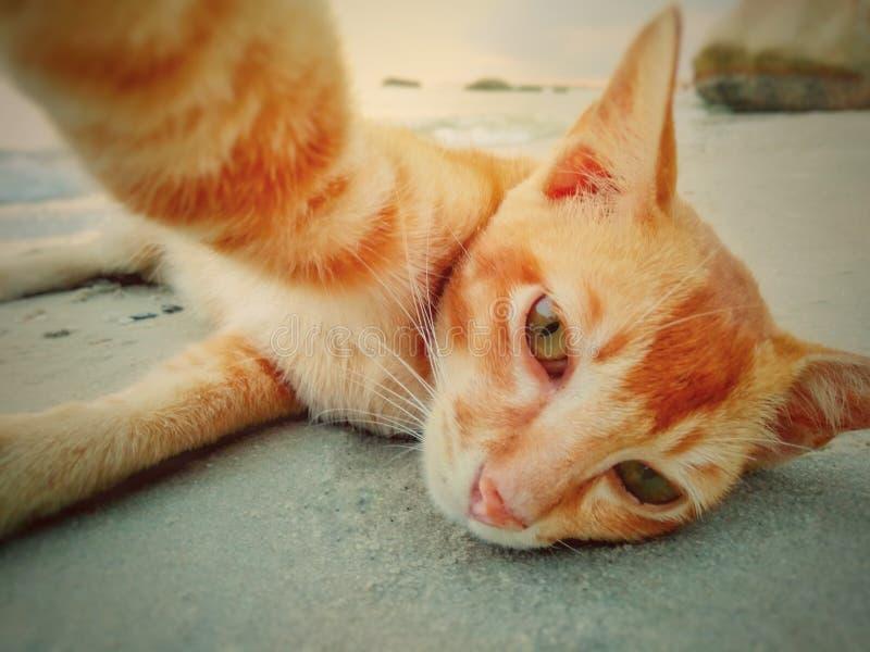 Selfie triste do gato fotografia de stock royalty free