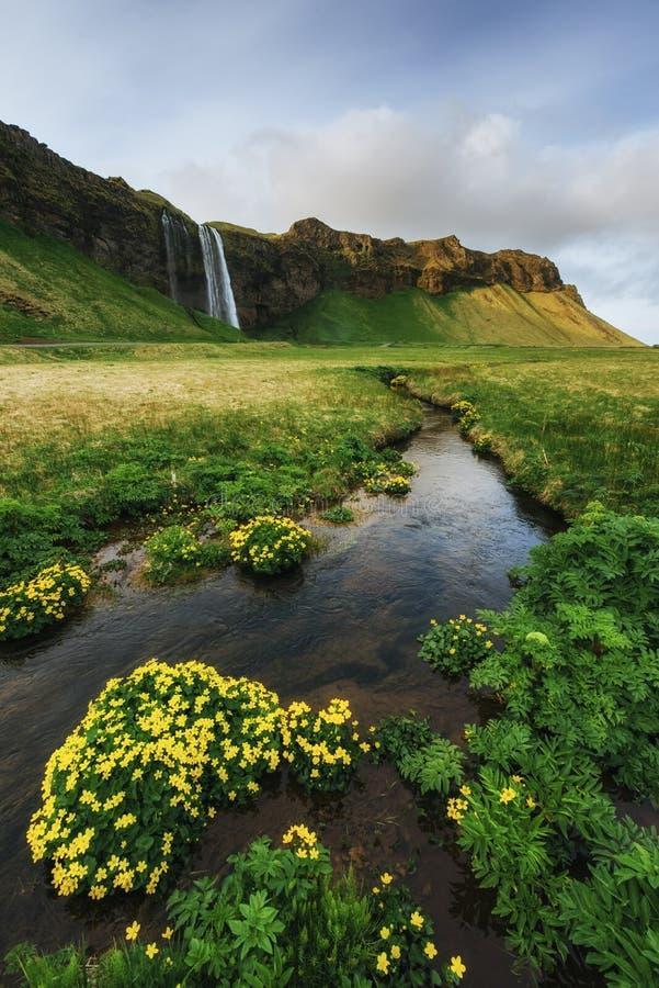 Seljalandfoss vattenfall Solig dag för härlig sommar royaltyfria bilder