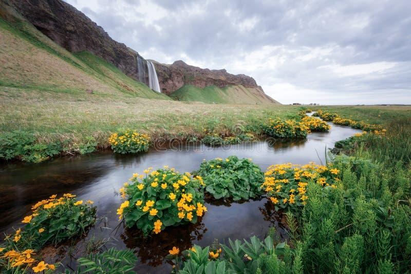 Seljalandfosswaterval royalty-vrije stock afbeeldingen