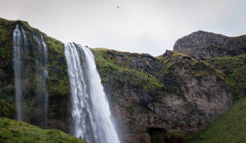 Seljalandsfoss siklawa Południowy Iceland Sceniczny fotografia royalty free