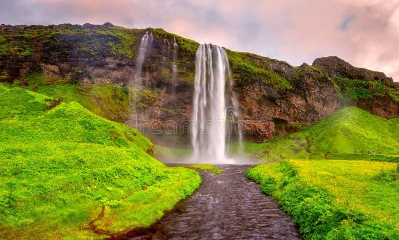 Seljalandsfoss siklawa w Iceland przy zmierzchem, zadziwiającym lato krajobrazem z zieloną kwiatonośną łąką i spada wodą, podróż zdjęcia stock