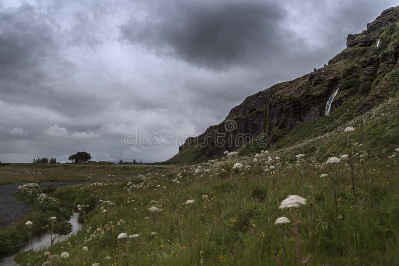 Seljalandsfoss w lecie, Iceland zdjęcie royalty free